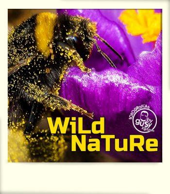 polaroid-album-WILD-NATURE